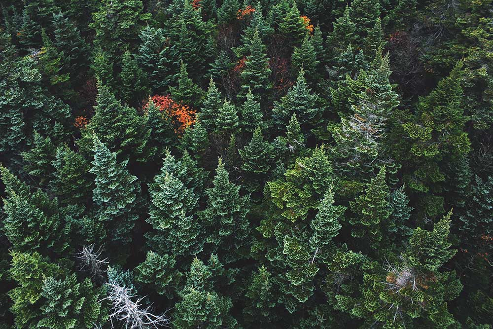 Optimize Your Search Engine Rankings with Evergreen Content